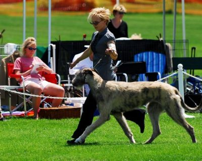 WDC All-Breed Summer Show